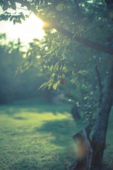 自然 植物 木 樹木 葉 葉っぱ 緑 幹 枝 成長 育つ 伸びる 草 草原 野原 野生 原っぱ 野草 林 森 森林 山奥 鬱蒼 密集 集まる 多い 沢山 空 太陽 太陽光 光 陽射し 木漏れ日 逆光 眩しい 影 無人 室外 屋外 風景 景色 幻想的