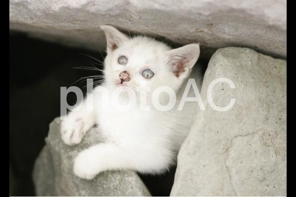 岩猫兄弟の写真