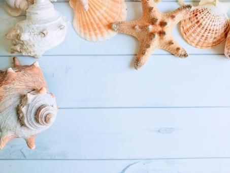 ホタテ貝に関する写真写真素材なら写真ac無料フリー