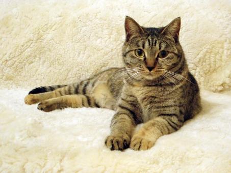 ねこ ネコ 猫 ソファ ラグ くつろぐ かわいい ふかふか 麦わら 麦ワラ デブ 太った ぽっちゃり 冬 飼い猫 家猫 保護 野良猫 のらねこ