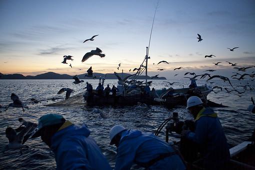 屋外 野外 漁 海上 漁獲 漁り 魚 獲る 漁業 海 水揚げ 大量 大漁 釣り 漁獲 人 人物 漁師 早朝 船 船上 漁船 釣り竿 竿 網 かもめ 鴎 カモメ