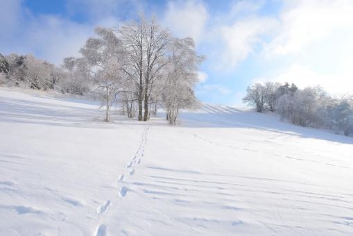 白樺 雪化粧 雪景色 木々 樹氷 新雪 屋外,外,野外,風景,景色,冬,雪,雪景色,冬景色,樹木,自然,スキー場,ゲレンデ,山,雪山,冬山,白銀,無人,斜面,枯れ木,吹雪く,森,林,銀世界,雪化粧,木々