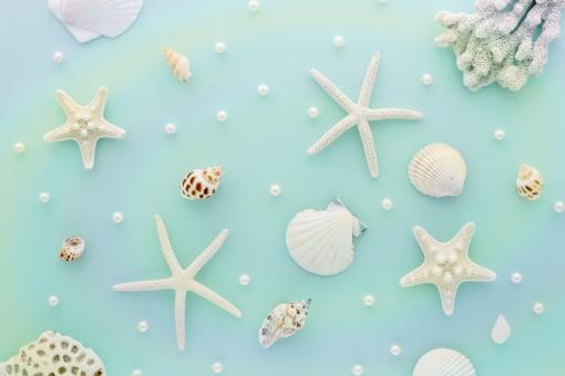 貝がらと渦巻の背景の写真