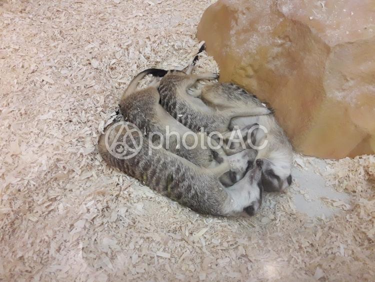 寝ているスラケットの家族の写真