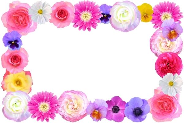 色々な花のフレーム 1の写真
