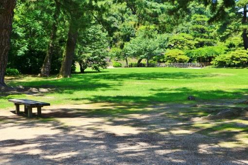 芝生 緑 グリーン 緑色 影 木陰 広場 憩い ベンチ イス 椅子 休憩所 明るい 初夏 生き生き 植物 風景 自然 背景 壁紙 木立