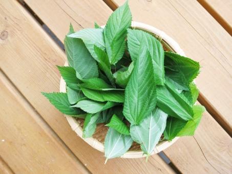 野菜 家庭 菜園 ベジタブル グリーン スープ ジュース ネバネバ ざる 青菜