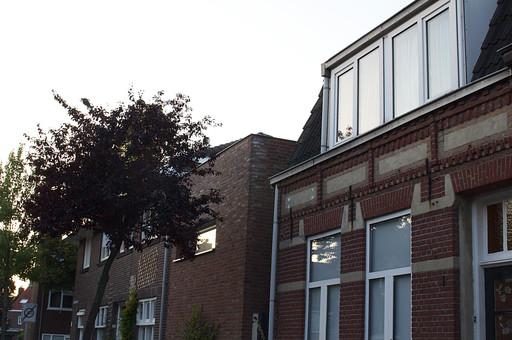 オランダ Holland アムステルダム 住宅 一軒家 一戸建て 家 ホーム 住居 レンガ 高級住宅 ガラス窓 サッシ 壁 外壁 レンガ調 断熱 暮らし 住まい ハウス 建物 庭木 木 植物