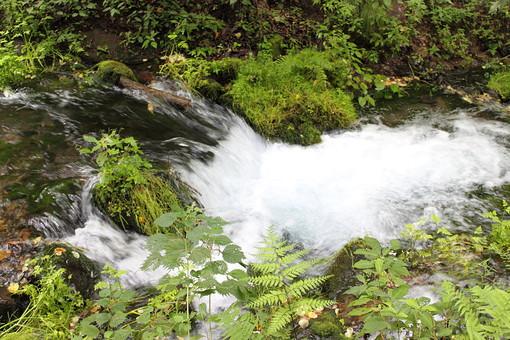自然 風景 景色 植物 景色 日本 野生 無人 屋外 草 雑草 葉 葉っぱ 緑 茶色 川 湧き水 水 水飛沫 流れる 綺麗 冷たい 苔 土 土地 地面 枝 枯れる 枯葉 枯れ枝