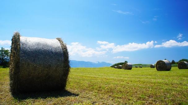 北海道 酪農 牧草 牧草ロール 青空 草原 大地 雲 緑 自然 牛 夏