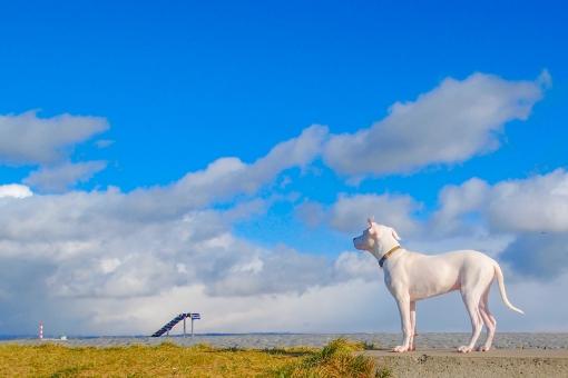 イヌ 犬 空 青空 頂上 白 将来 未来