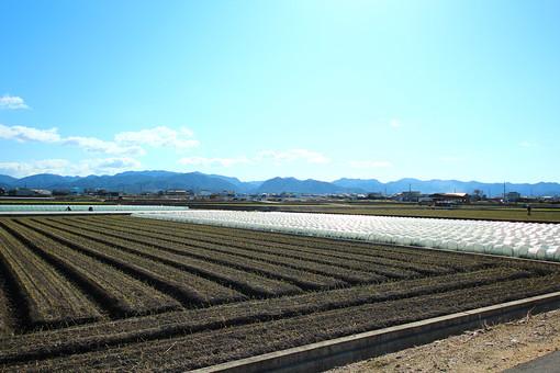 山と畑の風景の写真
