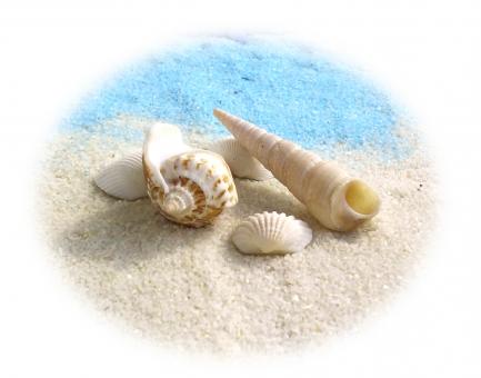 å¤ æµ· è²æ®» è²ãã æµ·æ°´æµ´ å¤ä¼ã¿ ãªã¾ã¼ã åå½ æµ·å¤ æè¡ æµ·è¾º çæµ çå¤ æ³¢ ãã«ã³ã¹ æãåº å·»è² äºæè² ç½ é æ°´è² å¤ªé½ ãã¯ã¹ã㣠èæ¯ summer sea shell white blue vacation