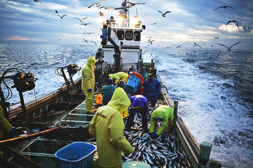 屋外 野外 漁 海上 漁獲 漁り 魚 獲る 漁業 海 水揚げ 大量 大漁 釣り 漁獲 早朝 船 船上 漁船  網 引き揚げ 捕獲 人 人物 漁師 波