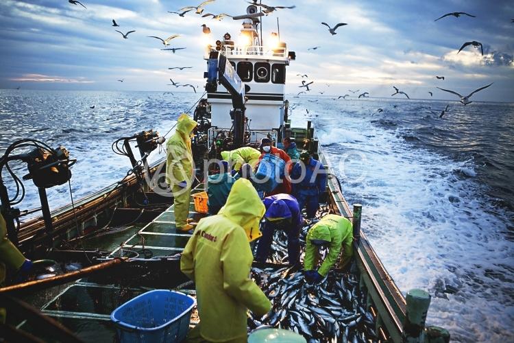 漁10の写真