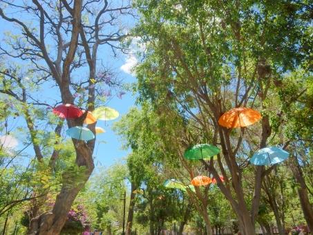 傘 かさ カサ カラフル 木 緑 空 青空 風景