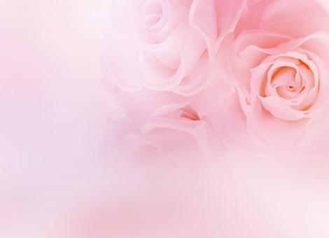 薔薇 バラ ばら 淡い ピンク 花 フラワー 背景 パステル バックグラウンド 壁紙 テクスチャ エステ きれい 美しい ウェディング ブーケ ブライダル 結婚 結婚式 飾り 花飾り 花模様 装飾 デコレーション 美容 母の日 ホワイトデー バレンタインデー バレンタイン 招待状 ウェルカムボード 誕生日 誕生日カード ポストカード お祝い 記念日 メッセージカード メッセージ ギフト ギフトカード 模様 女性 女性的 上品 エレガント