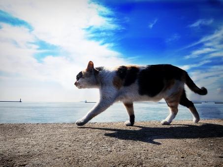 歩く 空 青 海 三毛 ミケ 猫 野良猫 動物