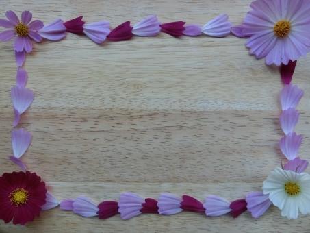 秋桜の花弁のフレーム フレーム frame コスモスのフレーム 枠 秋桜のフレーム 秋フレーム 花のフレーム 花の枠 花弁のフレーム 花びらのフレーム