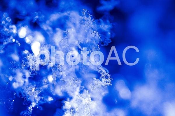 雪の幻想の写真
