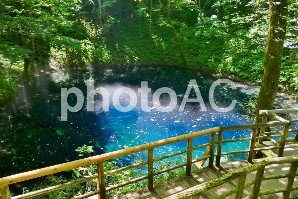 《十二湖の青池》青森県深浦町の写真