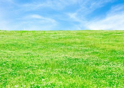自然 草原 風景 植物 草 空 青空 雲 土手 クローバー クローバー畑 三ツ葉 みつば シロツメクサ 芝 芝生 丘 シンプル さわやか 爽やか 爽快 鮮やか すがすがしい 晴れ 快晴 天気 ナチュラル グリーン 新緑 明るい 原っぱ はらっぱ エコ エコロジー 環境 eco eco 癒し いやし リラックス リラクゼーション やすらぎ 安らぎ 背景 背景素材 テクスチャ テクスチャー バックグラウンド 5月 6月 初夏
