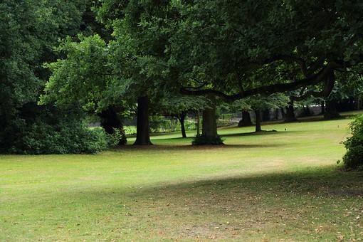England United Kingdom UK London 倫敦 英国 異国 イギリス ロンドン 世界都市 海外 外国 植物 樹木 木々 緑 茂る 生い茂る 広場 公園 ジョギング 散歩 広い 自然 風景 観光 旅行 旅 スポット 憩い 休憩 休息 デート 芝 植物