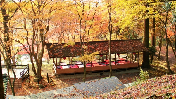 เกียวโต 紅葉 kyouto ใบสีแดง fall colors foliage leaves autumn color japanese maple 高雄 神護寺 マモル 京都 yamamoto mamoru