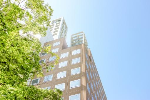 さわやか街路樹とビルの写真