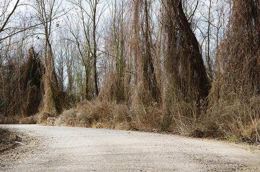 セルビア共和国 セルビア 南東ヨーロッパ バルカン半島 内陸 共和制国家 旧ユーゴスラビア セルビア・モンテネグロ 外国 外国風景 海外 海外風景 景色 風景 自然 美しい 美しい自然 植物 季節 秋 冬 落葉 樹木 森 林 道 山道