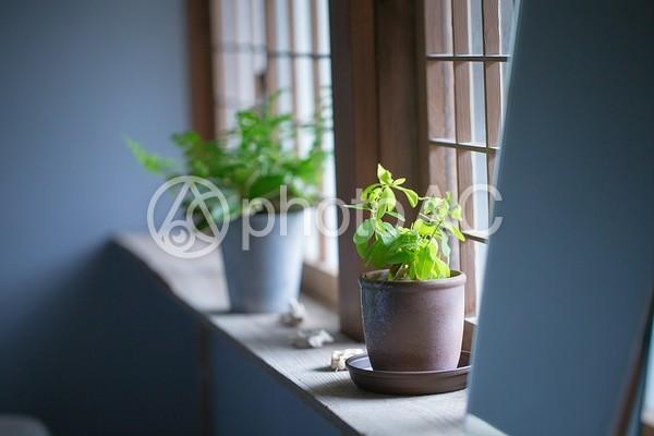 窓の風景の写真