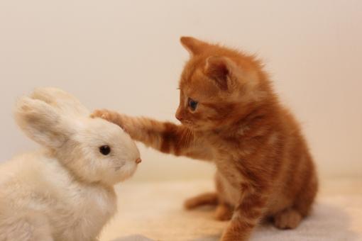 うさぎと遊ぶ猫