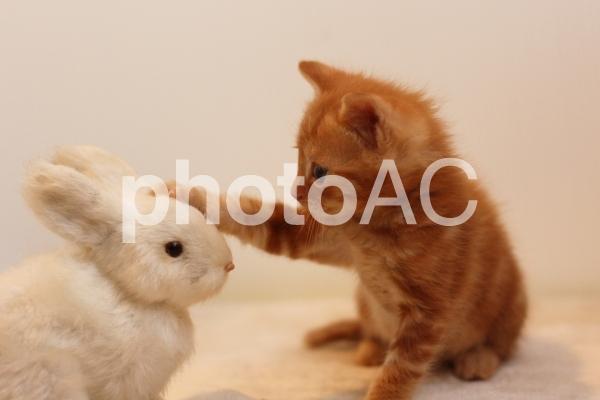 ぬいぐるみを撫でる子猫の写真