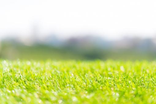 グリーン 芝生 屋外 庭 ガーデニング クリーン 手入れ エコロジー コピースペース フリー 自由 植物 自然 省エネ 農業 菜園 家庭 ガーデン 庭園 環境