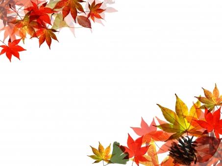 季節 植物 コピースペース 木 枝 赤 和風 紅葉狩り 日本 テキストスペース 空 和 オレンジ 黄色 行楽 模様 葉 壁紙 グラデーション キラキラ 銀杏 いちょう イチョウ まつぼっくり マツボックリ パターン 背景 自然 風 行事 木の実 木の葉 山 ライン デザイン 紅葉 椛 モミジ もみじ 葉っぱ autumn オータム 切取 切り抜き かえで カエデ 楓 秋素材 秋の素材 紅葉素材 もみじ素材 チラシ素材 web素材 テクスチャー テクスチャ 落ち葉 落葉 枯れ葉 枯葉 メッセージ カード バックグラウンド ナチュラル 囲み 枠 飾り罫 橙 風流 光 輝き 素材 幻想的 透明感 オレンジ色 飾り枠 和柄 罫 抽象的 グラフィック 暖色 バックグランド 柔らかい 背景素材 地紋 フォトフレーム 秋色 フレーム枠 背景デザイン 潤い 秋晴れ 写真フレーム 光彩 彩り 秋 バックイメージ 文字スペース 秋のイラスト 秋景色 秋イメージ 和風イメージ