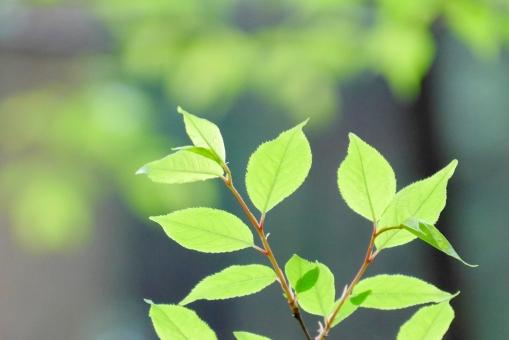 みどり ミドリ 草木 庭木 5月 6月 五月 六月 新緑 緑 グリーン 葉 木漏れ日 若葉 葉っぱ テクスチャー テクスチャ 春 初夏 夏 風景 青葉 壁紙 背景素材 素材 コピースペース テキストスペース リラックス リラクゼーション 癒し キラキラ 爽やか さわやか 植物 樹木 木 いやし イメージ 庭 5月 6月 健康 清々しい 森林浴 公園 涼しい 涼しげ 涼感 清涼感 優しい ソフト エコ エコロジー 環境 明るい 光 自然 背景