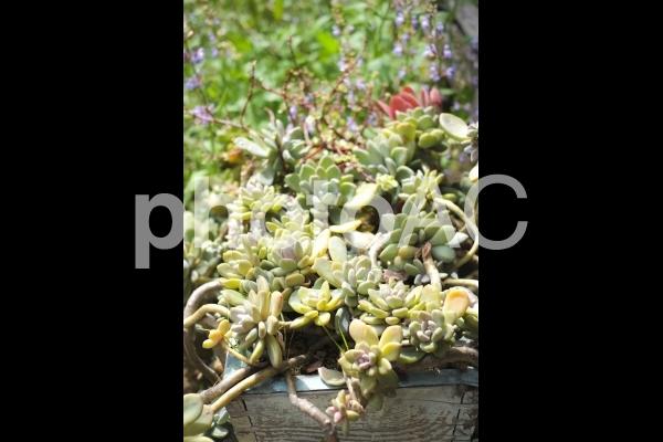 多肉植物やサボテンたちの写真