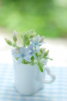 庭 カップ ハート 小花 緑 チェック 布 ガーデン テーブルフォト ホワイトデー コーヒーカップ 夏 ブルー 青 さわやか 爽やか 涼しい 涼しげ 白 水色の花 七月 気持ち 夏の花 青い花 清潔 清楚 可憐 水色 ブルースター アレンジ アレンジメント 小物 雑貨 箱 グリーン フラワー イメージ エステ グリーティングカード 背景 壁紙 母の日 父の日 植物 初夏 5月 6月 五月 六月 5月 6月 7月 8月 誕生日 プレゼント メッセージ カード フラワーアレンジ お祝い 花 春 リラックス リラクゼーション くつろぎ くつろぐ 幸せ 幸福 愛 恋愛 やわらかい ソフト バックグラウンド 背景素材 素材 マクロ アップ クローズアップ 明るい 美しい きれい 綺麗 かわいい 可愛い 癒し 美容 健康 アロマ