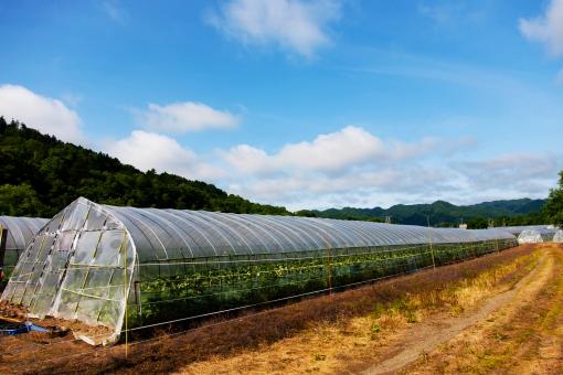 ビニールハウス ビニール 植物 食物 育てる 年中 温かい 暑い 保温 透明 農家 農業 北海道 空 大空 森 山 山中 草 自然 大自然 風景 景色 雄大 日本 土 大地 青空 雲 晴れ 青 ブルー グリーン