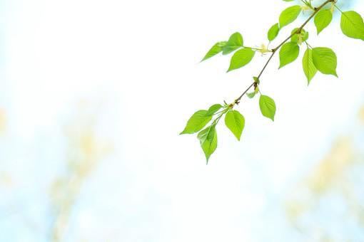 葉 緑 木 新緑 新芽 日本 木の葉 自然 植物 屋外 壁紙 背景 背景素材 バックグラウンド 光 青空 環境 エコ 木漏れ日 こもれび 枝 さわやか 爽やか 初夏 若葉 テキストスペース