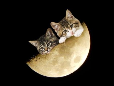 お月様(月齢7.0、上弦の月)と子猫ちゃん(PSD)の写真