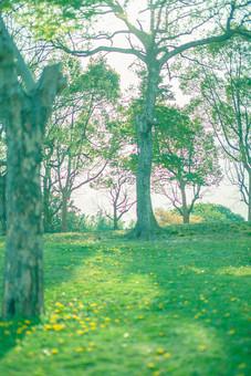 自然 植物 花 花びら 黄色 たんぽぽ タンポポ 蒲公英 草原 原っぱ 野生 野草 野花 沢山 多い 密集 咲く 満開 育つ 成長 伸びる 集まる 木 樹木 幹 無人 風景 景色 屋外 室外 葉 葉っぱ 緑 空 陽射し 太陽 太陽光 木漏れ日 影 幻想的
