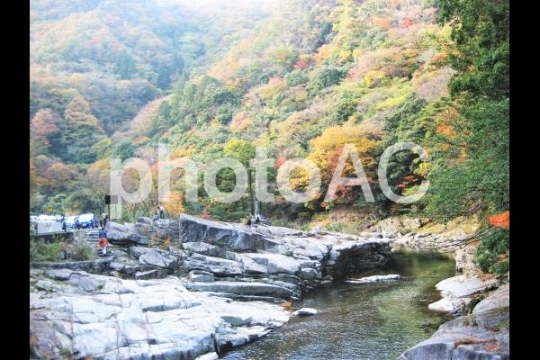 秋の奥津温泉 紅葉満開 清流 紅葉のスポット 奥津渓 岡山観光の写真