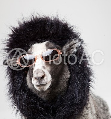 セレブ羊6の写真