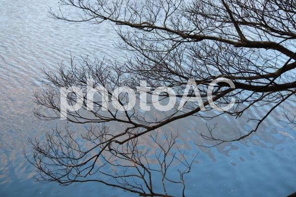 川岸の木の写真