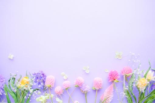 春らしいドライフラワーフレームの写真