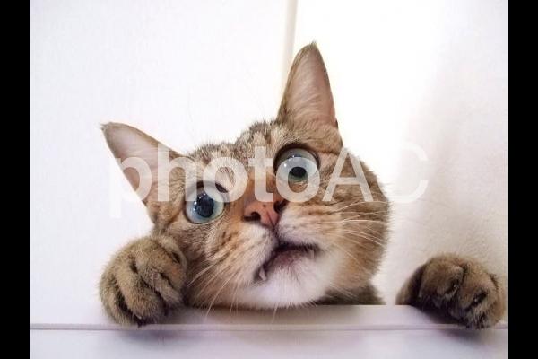 覗き込む猫の写真