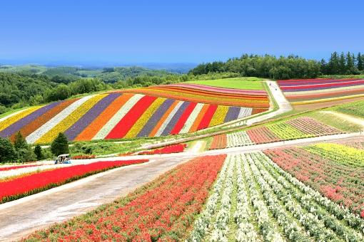 北海道 美瑛の風景の写真