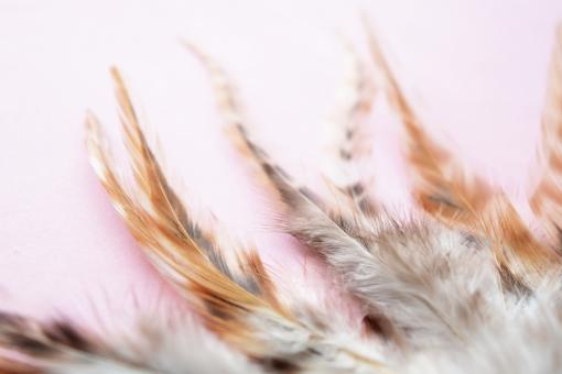 羽 はね 羽根 鳥の羽 鳥 影 陰 かげ 美しい 綺麗 幻想的 神秘的 シンプル ふわふわ フワフワ 柔らかい やわらかい なびく 毛 鳥の毛 エコ 環境 eco 自然 動物 鳥類 背景 テクスチャ テクスチャー 壁紙 素材 イメージ 羽ばたく 天使 エンジェル とり 茶色 ブラウン 茶系 ブラウン系 ピンク ぴんく 桃色 背景ピンク 背景ぴんく グレー 灰色 2017年 2017 2017 2017年