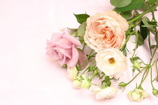 薔薇の花束14の写真